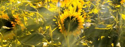 金色阳光证券服务内容有哪些、产品分几级