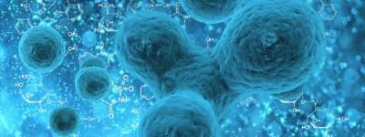 """为何说干细胞是""""维修工"""",免疫细胞是""""清理工""""?华夏源告诉你答案"""